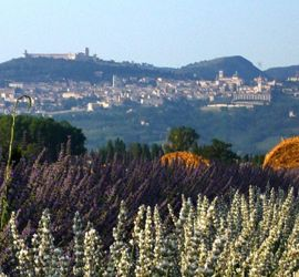 Assisi-Agriturismo